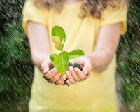 Child holding young plant in the rain Royalty Free Stock Image