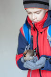 Child holds bird waxwing Stock Photos