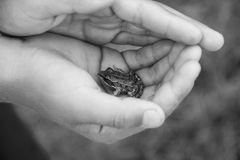 The child holds a frog Royalty Free Stock Photography