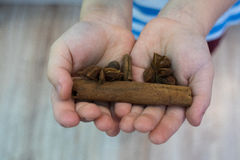 The child holds in his hands a stick of cinnamon, allspice, ginger, star anise,. The child holds his hands a stick of cinnamon, allspice, ginger, star anise royalty free stock photos