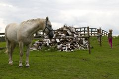 Child and horse. Two children and white horse Stock Photo