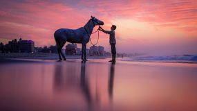 A child with a horse on the beach. In Gaza City royalty free stock photos