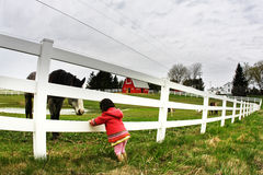 Child and horse staring. At at eachother's eyes Royalty Free Stock Images