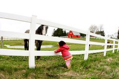 Child and horse staring3. Child and horse staring at at eachother's eyes Stock Photography