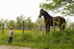Boy and horse. Young boy and horse staring at each other across the fence Stock Photography