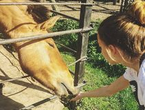 Child and a horse. At the zoo park Royalty Free Stock Photos