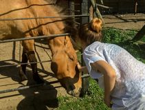 Child and a horse. At the zoo park Stock Photography