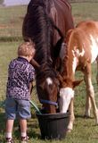 Child with Horses. Boy with garden hose putting water in bucket for dark bay Thoroughbred mare and paint foal Stock Images