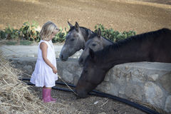 Child with horses. Little girl feeding three horses with hay Stock Photography