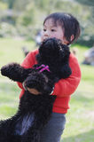 Child hug poodle Stock Images