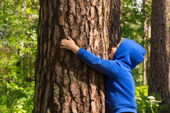 Child hugging pine (tree) Royalty Free Stock Photography