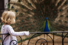 Child and indian peacock Stock Image