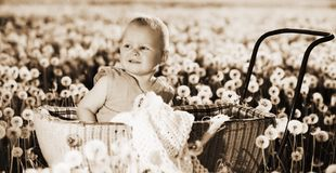 A child inside pram in meadow with dandelions. Retro sepia photo Royalty Free Stock Image