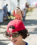 Child with kestrel perched on his head Royalty Free Stock Photography