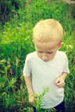 Child kid picking flowers in meadow. Environment. Child kid examining and picking flowers in meadow. Environmental awareness education. Green summer nature stock image