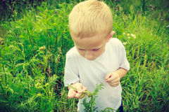 Child kid picking flowers in meadow. Environment. Child kid examining and picking flowers in meadow. Environmental awareness education. Green summer nature stock images