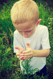 Child kid picking flowers in meadow. Environment. Child kid examining and picking flowers in meadow. Environmental awareness education. Green summer nature royalty free stock photo