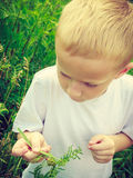 Child kid picking flowers in meadow. Environment. Child kid examining and picking flowers in meadow. Environmental awareness education. Green summer nature stock photo
