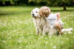 Child kissing Golden Retriever dog. As sign of love and friendship stock photography