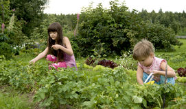 Child in kitchen garden Royalty Free Stock Photos