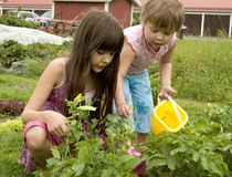 Child in kitchen garden royalty free stock photography