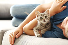 Child with kitten. On grey sofa at home Royalty Free Stock Image