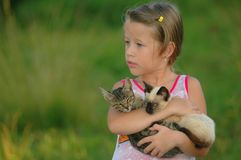 Child and kittens. A child and two kittens royalty free stock image