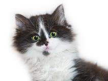 Child kitty baby head Royalty Free Stock Photo
