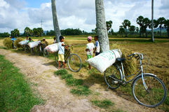 Child labor at Asia poor countryside. MEKONG DELTA, VIETNAM- JULY 25: Child labor at Asia countryside, group of unidentified children transport straw bag by bike Royalty Free Stock Image