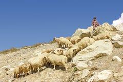 Child labor - shepherd child sitting on a mountain rock royalty free stock photo