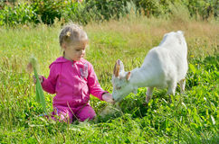 Child on the lawn with a goat Stock Photo
