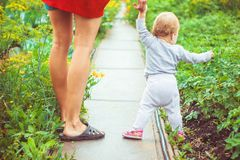 The child learns to walk on the grass. The child learns to walk in the park barefoot on the grass Stock Photo