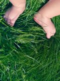 Child legs on a green grass. Heels on newborn baby on a green lawn stock photo