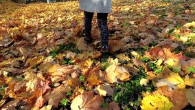 Child legs walking through leaves covered ground in autumn season. Handheld follow shot stock footage