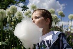 Child licks fairy floss Royalty Free Stock Photos