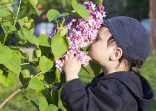 Child and lilac flower royalty free stock photos