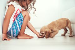 Child with little dogs playing at home. Girl play with puppie.  royalty free stock photo