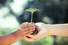 Child little girl and parent holding young plant in hands Stock Photos