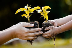 Child little girl and parent holding young plant in hands Royalty Free Stock Photo