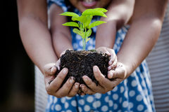 Child little girl and parent holding young plant in hands. Together as save world concept in vintage color tone Stock Photos