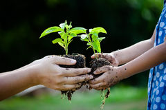 Child little girl and parent holding young plant in hands. Together as save world concept in vintage color tone Stock Images