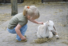 Child and little goat 1. A small girl tries to comfort a baby goat on a farm Royalty Free Stock Image