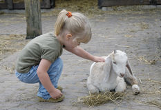 Child and little goat 2. A small girl tries to comfort a baby goat on a farm Royalty Free Stock Photos