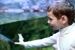 Child looking at aquarium Stock Photo