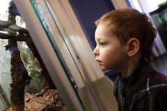 Child looking at beetles Royalty Free Stock Photography