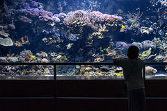 Child looking a big aquarium. A child looking fish in a big aquarium Royalty Free Stock Photography