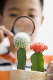 Child Looking at Cactus with Magnifying Glass Stock Images