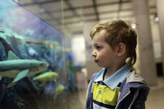 Child looking at fishes Stock Images