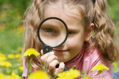 Child looking through a magnifying glass on dandelions Royalty Free Stock Images