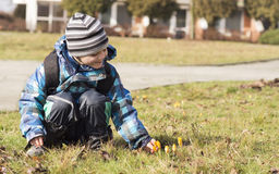 Child looking at spring flowers Stock Photos